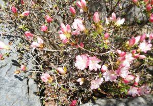 岩に咲く花